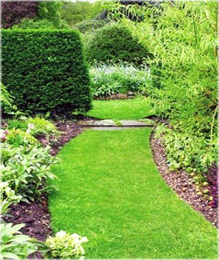 Garden Path and Lawn